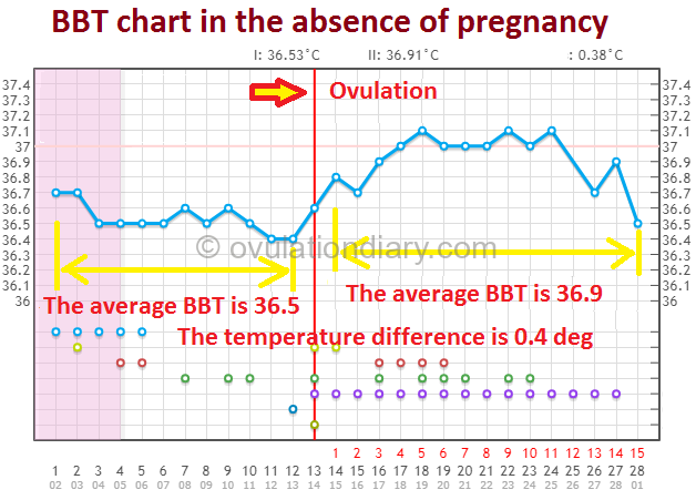 BBT chart in the absence of pregnancy