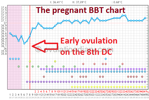 Early ovulation on the 8th DC. The pregnant BBT chart