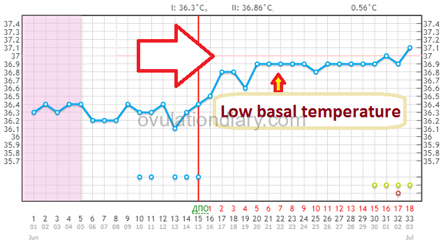 Low basal temperature Low basal temperature in the second and first phases. Examples of the graphs during a pregnancy