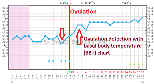 Ovulation detection with basal body temperature chart