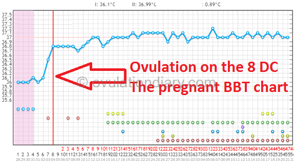 Ovulation on the 8 DC The pregnant BBT chart
