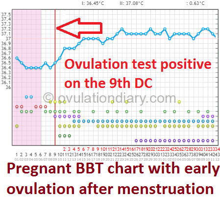 Pregnant BBT chart with early ovulation after menstruation