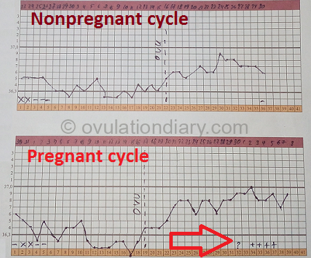 The basal body temperature pregnancy and non-pregnancy charts