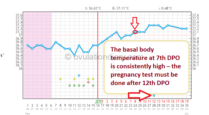 The basal temperature at 7th DPO is consistently high – the pregnancy test must be done after 12th DPO