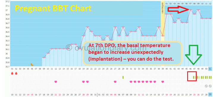 The basal temperature chart after the 7th day past ovulation shoved BBT increase, relative to phase 2.
