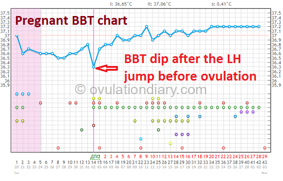 The drop in basal body temperature after the LH jump before ovulation