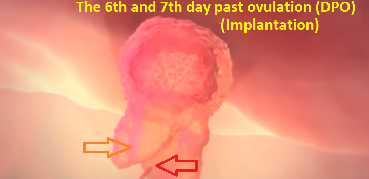 The symptoms of pregnancy on the 6-7th day past ovulation (DPO)