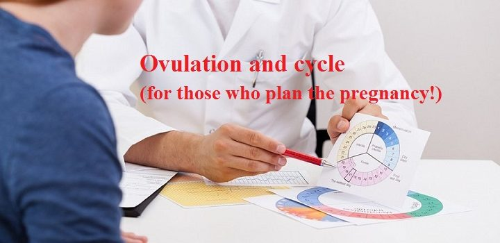 Which cycle day is ovulation on and how to calculate it?