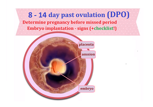 8-14 day past ovulation (DPO) - The first signs of early pregnancy!
