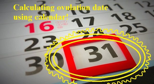 Calculating ovulation date during the average menstrual cycle1