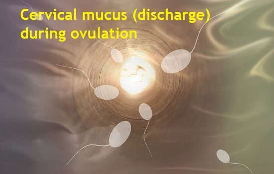 What does your Discharge look like when you are Ovulating ...