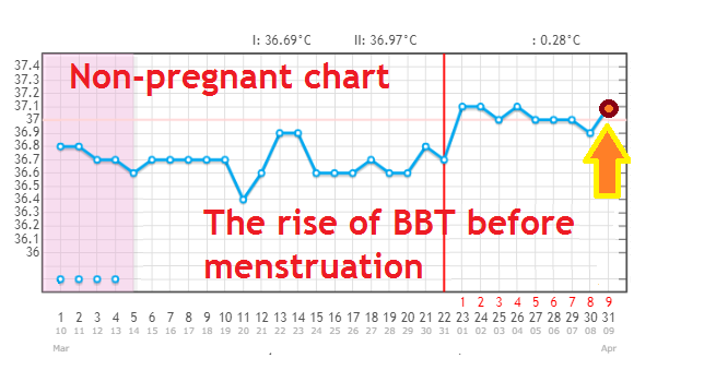 Why is BBT rising after ovulation (+pregnant charts!)