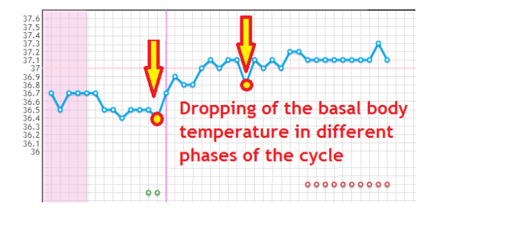 Dropping of the basal body temperature in different phases of the cycle – it means…