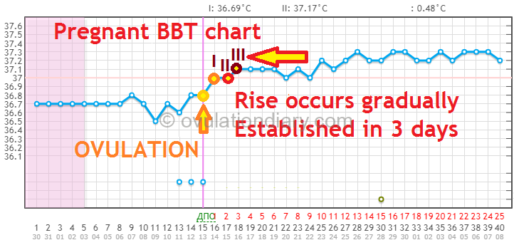 The increased basal body temperature on a pregnant chart - Rise occurs gradually