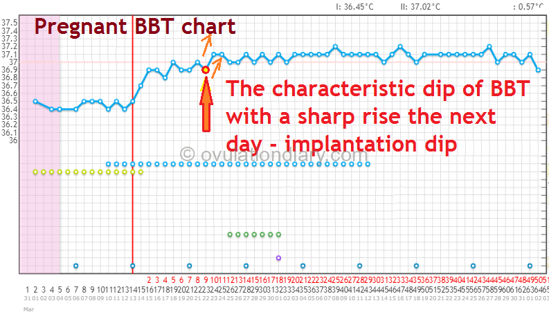 The pregnant BBT chart with a second jump in temperature after implantation