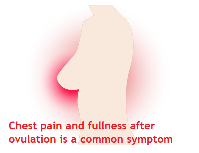 Chest pain and fullness after ovulation is a common symptom
