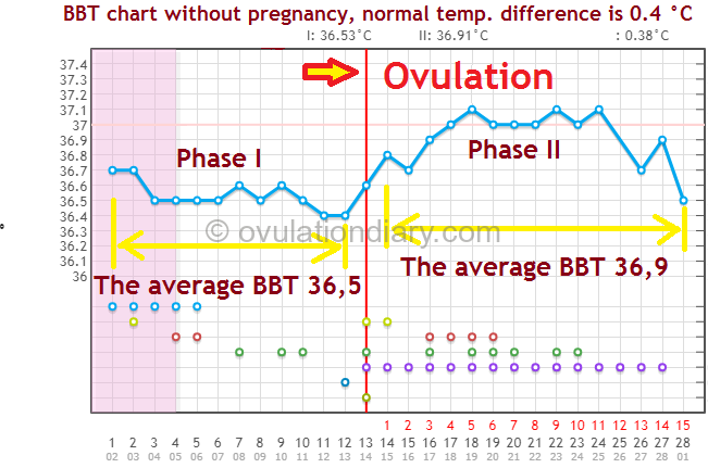 BBT without pregnancy on the BBT chart. Normal temperature difference is 0.4 °C or 0.72° F