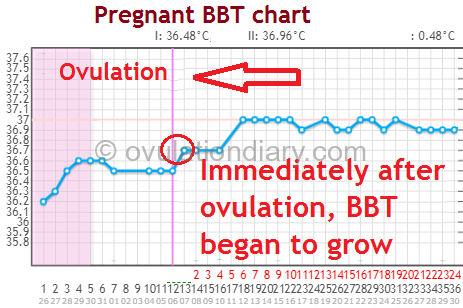 Immediately after ovulation, BBT began to grow. Ovulation occurred on the 12th DC confirmed by ultrasound and tests for LH