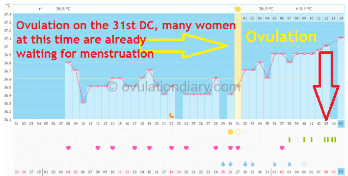 Ovulation during an erroneous missed period in menstruation. Pregnant BBT chart. Ovulation on 31 DC